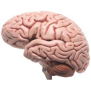 O livro é uma prótese para o cérebro?